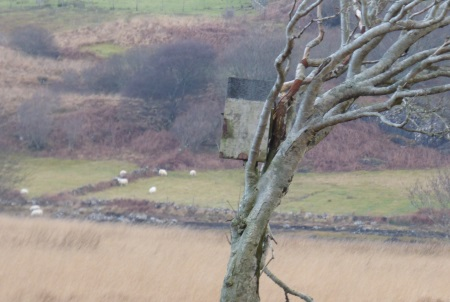 Barn Owl box still                                               standing
