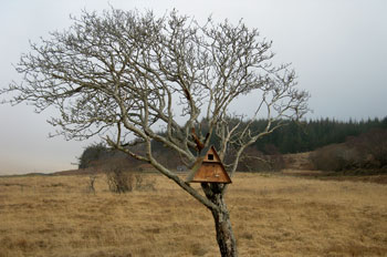 Re-located                             Barn Owl box in tree