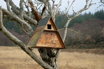 Re-located                             Barn Owl box
