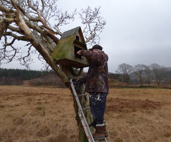 Cleaning Barn Owl                                       box