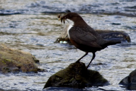 Dipper with mouth                                     full