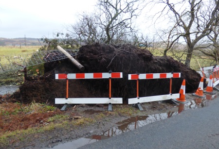 Fallen tree by the road                                                           side