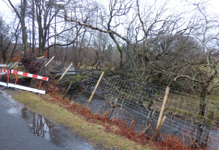 Fallen                                                           tree near                                                           Ardrioch