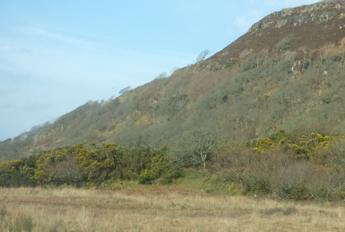 Gorse flowering on the hill                                       side