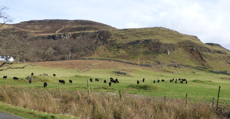 Hebridean sheep and hills