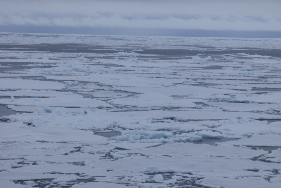 Ice Flows Artic