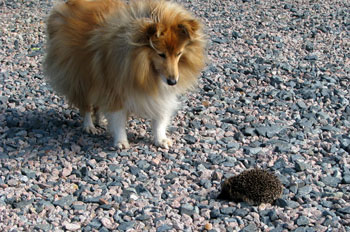 Misty and Hedgehog