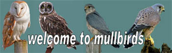 Mull                                       birds web site