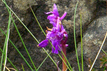 Orchid at Eas Force
