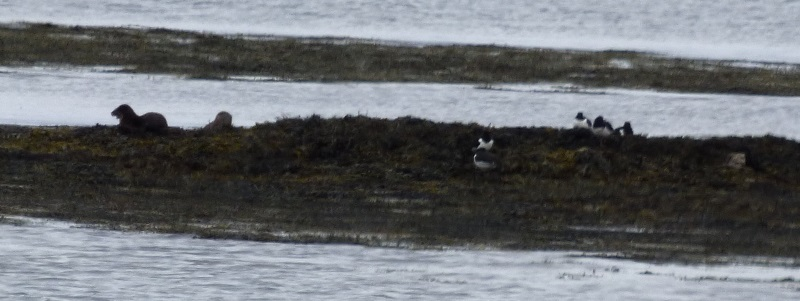 Otters and