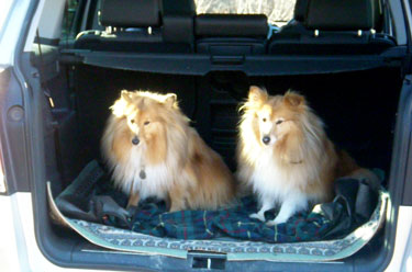 Sally & Misty in the car                                       after their walk
