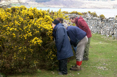 Sniffing the gorse