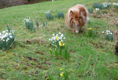 Snowdrops and Sally